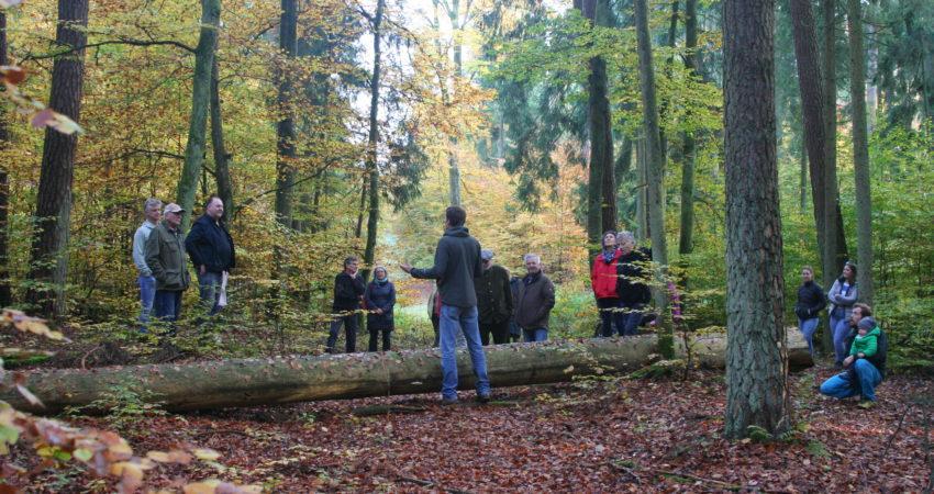Im Naturwaldreservat Damm